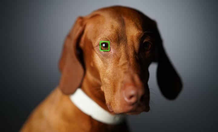 Reconnaissance et suivi de l'œil animal en temps réel