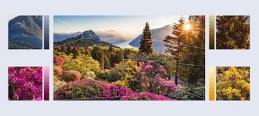 Images de fleurs des montagnes avec la technologie XR HDR Remaster