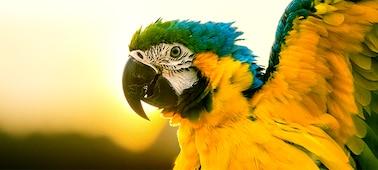 Image de perroquet illustrant le détail d'une image 4K