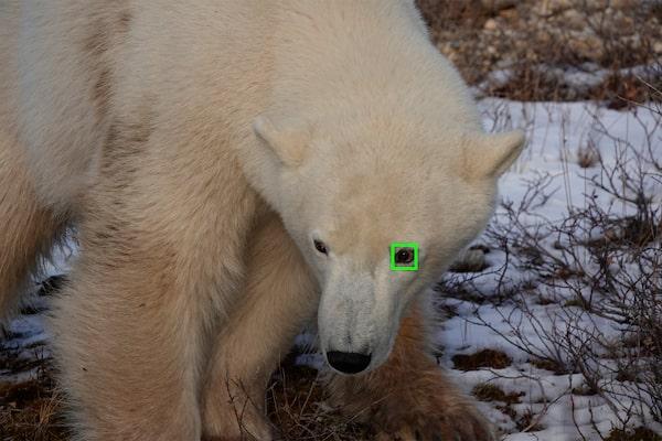 Eye AF temps réel pour les animaux