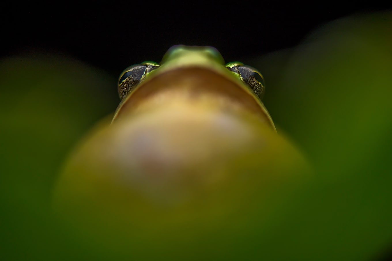 javier-aznar-sony-alpha-7RIII-tres-gros-plan-d-une-grenouille